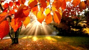 1395364828-autumn+leaves.jpg-original